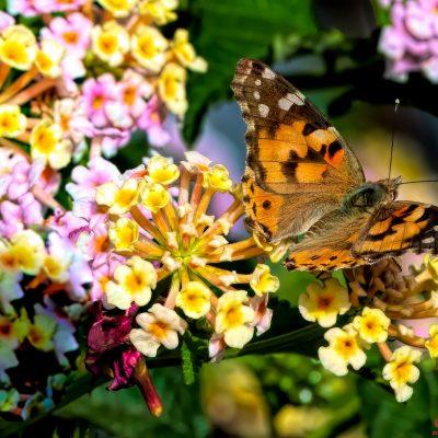 Farfalla Ganzirri